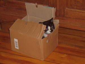 Hop.. dans la boite !