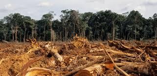 Déforestation : un phénomène mondial aux conséquences dévastatrices -  Fondation Nicolas Hulot