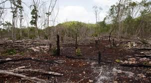 La déforestation, un fléau à enrayer